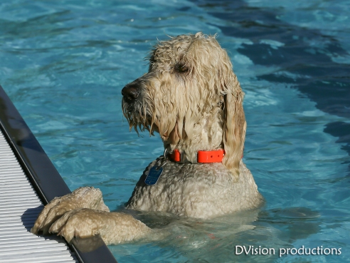 Dog Day at the Scott Carpenter Pool, Boulder CO, Sept 2014