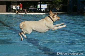Dog Day at the Scott Carpenter Pool, Boulder CO, Sept 2014