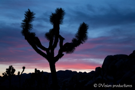 Joshua Tree sunset.