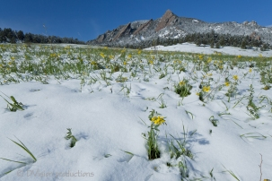 Springtime snow and the Flatirons, Boulder CO.