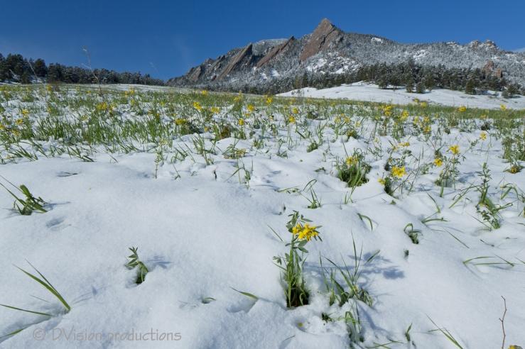 Springtime snow and the Flatirons, Boulder CO.
