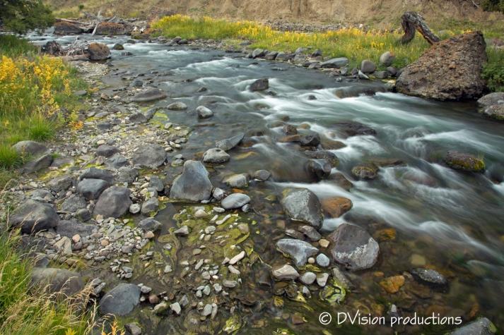 Morning creek view, Yellowstone NP.